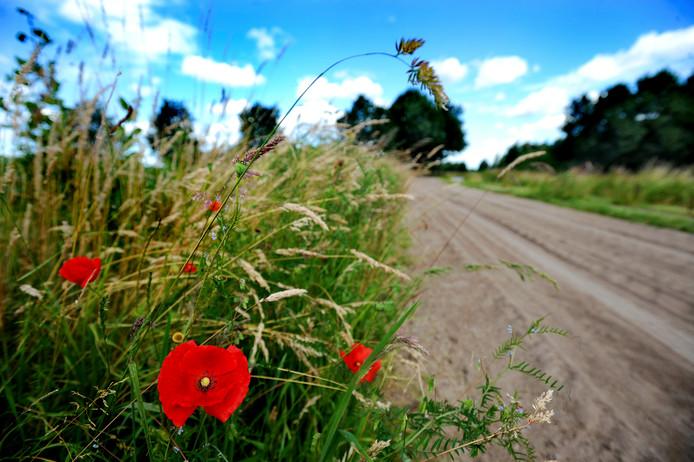 De gemeente Berkelland heeft omstreeks 900 hectare aan bermen in eigendom en beheer. De coalitiepartijen willen kijken of het beheer niet goedkoper kan.