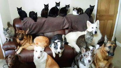 Hartverwarmend: Britse vrouw maakt perfect 'familieportret' van haar 17 katten en honden