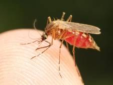 La transmission du virus du Zika par un simple baiser est improbable