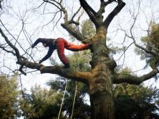 Waarschuwing over gevaarlijke dode boomtakken helpt niet in Hoge Hexel