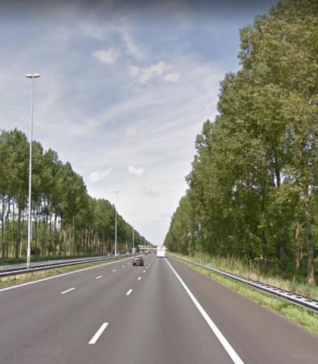 Karakteristieke bomen langs A2 bij Boxtel en Best worden gekapt
