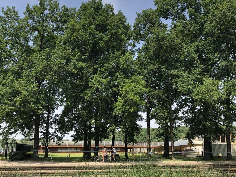 Rond de eiken werden al linten gespannen om bezoekers weg te houden van de bomen.