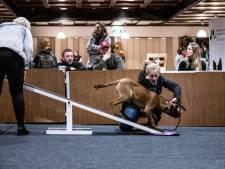 Drukte bij indoor sportcentrum voor honden