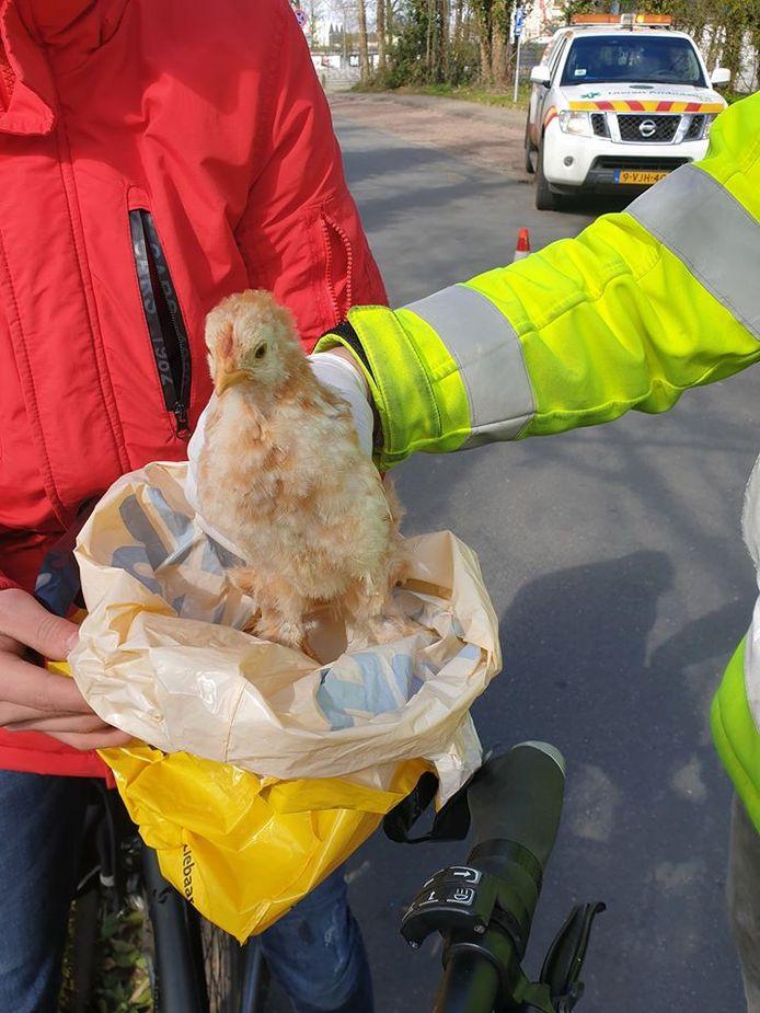 Medewerkers van de Dierenambulance troffen de kuikens aan in een plastic zak.
