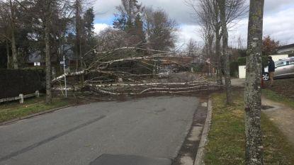 Na de storm: groendienst moet op minstens 91 plaatsen (!) bomen vellen en heeft nog ruim een maand werk