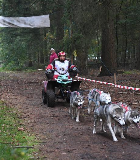 Poolhonden trainen in alle vroegte, anders is het veel te heet