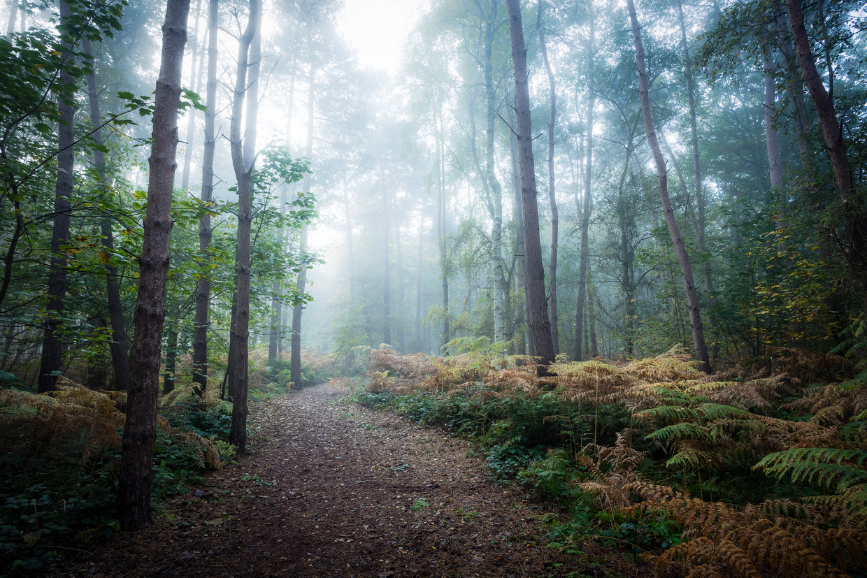 Een mistig bos in Norfolk, Engeland.  Beeld Getty Images