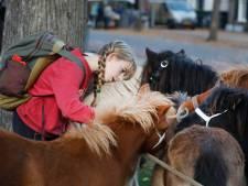 Paardenmarkt wil uitbreiden: bedrijven, denk aan ons!