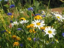 Gezocht in Zeist: plekken voor meer bloemetjes en beestjes