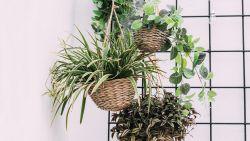 Met deze trucjes geef je je planten nooit meer te veel water