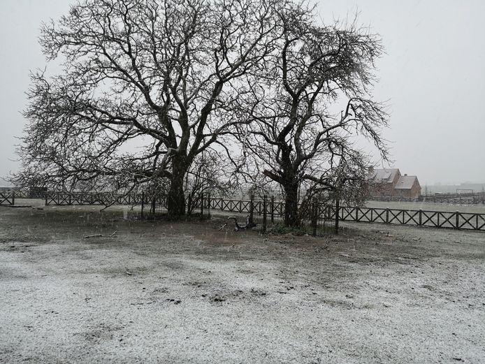 Er vormt zich al een mooi sneeuwtapijtje.