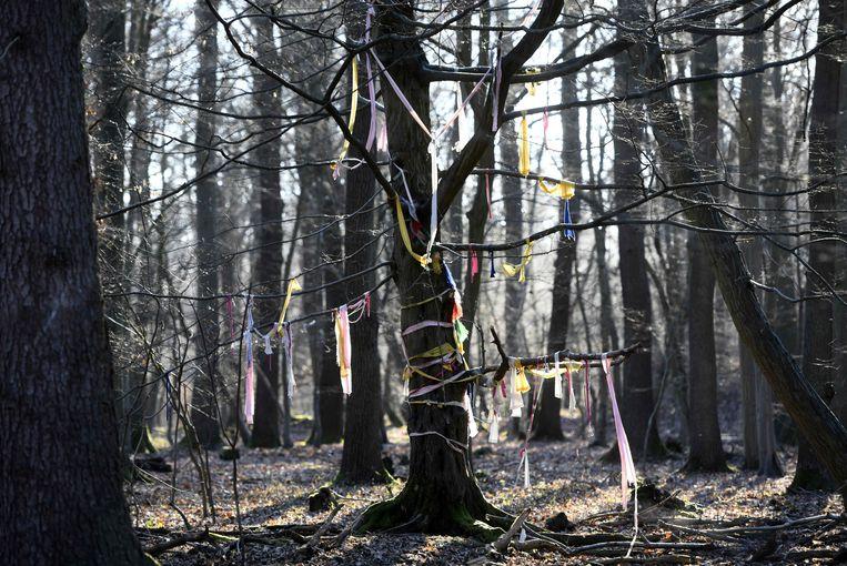 Bomen in het Hambacher Forst versiert door milieuactivisten in de buurt van Buir. Beeld AFP