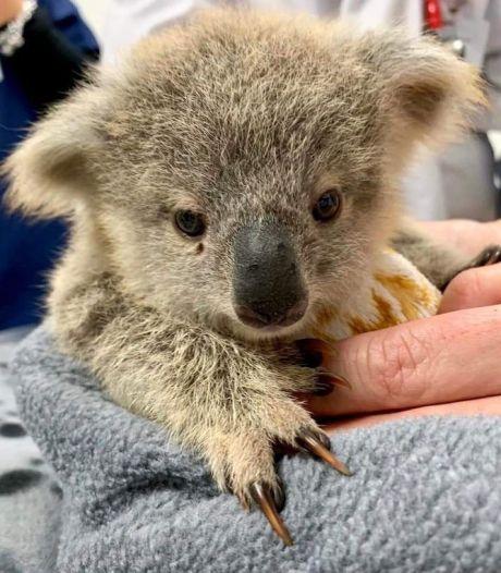 Voici comment venir en aide aux animaux rescapés en Australie