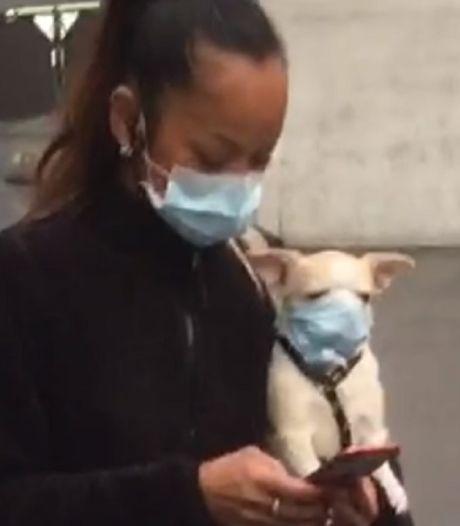 Un chien avale un masque, une femme met un masque à son chien: la mise en garde des spécialistes