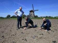 Naar een betere wereld met de rode kool van de akkers in het Land van Heusden en Altena