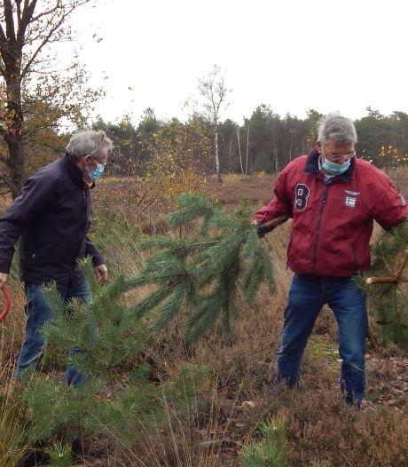 Groen uit Maashorst naar kerststal in Bossche Sint-Jan