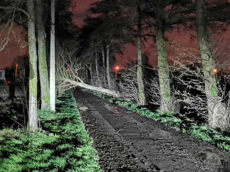 In de Wolvestraat in Izegem mist de bomenrij langs de dreef voortaan een exemplaar.