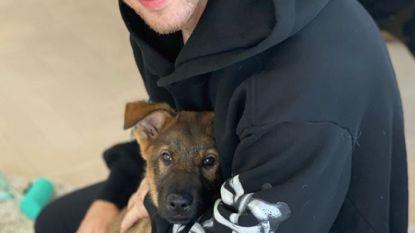 Priyanka Chopra verrast Nick Jonas met een puppy