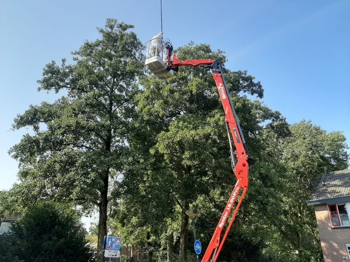 Een medewerker van Traas is bezig met het bestrijden van het nest in de boom in Veenendaal