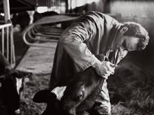 Paul Versteeg tekent met fotoboek het boerenleven. 'Er is een verkeerd beeld ontstaan'