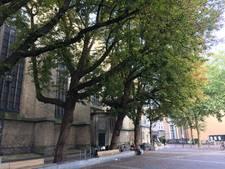 D66 wil nieuwe aanplant na bomenkap Zwolse binnenstad