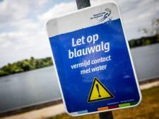 Zwemmers opgelet: hier kun je nu beter even geen duik nemen