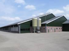 MS Schippers koopt boerderijen in Bladel: 'Koe kan jaar ouder worden'