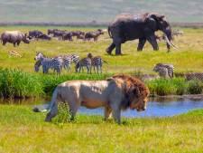 2021, année cruciale pour la biodiversité