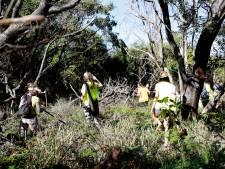 Des chiens renifleurs à la recherche de Theo Hayez à Byron Bay