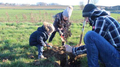 Milieuorganisaties starten met gigantische boomplantactie