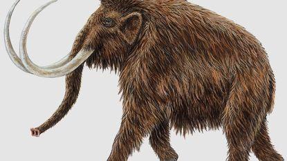 Wanneer stierf de laatste mammoet in de Lage Landen?