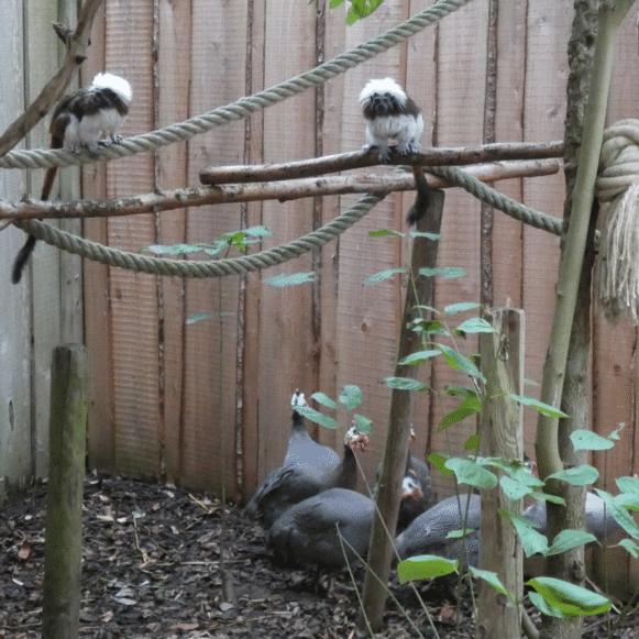 Samenvoeging diersoorten in dierenopvangcentrum De Zonnegloed.