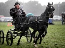 Traditierijke Fokpaardendag Lierop vernieuwt
