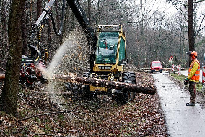 De provincie is van plan twaalf bomen te kappen bij kruispunten met zijwegen van de N315 om de verkeersveiligheid te vergroten.
