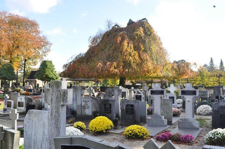 De werken starten op de begraafplaats in het centrum.