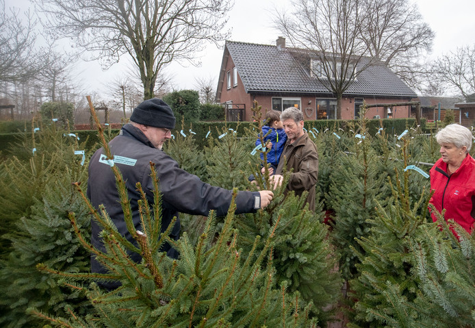 Iedereen Wil Weer Een Echte Kerstboom Uit Overberg Utrechtse