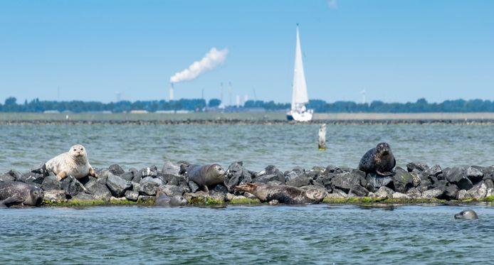Vanaf 10 meter diepte is het Grevelingenmeer een 'deathzone' stelt Stichting Anemoon.