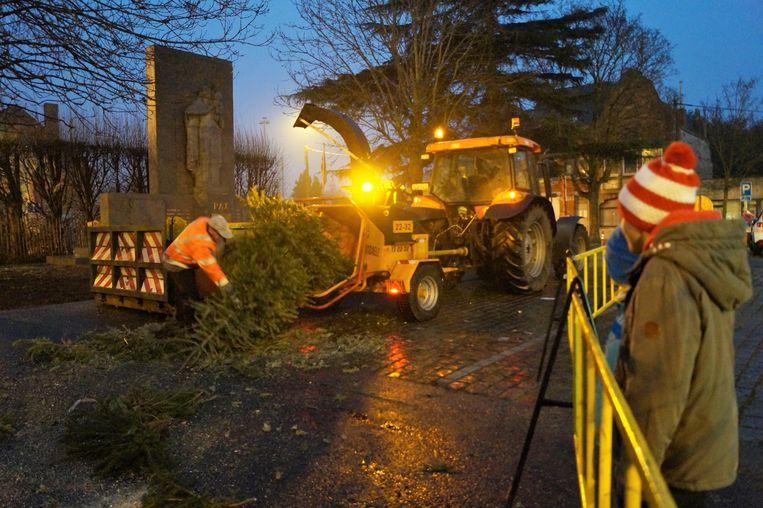 Het verhakselen van kerstbomen gebeurt ook al op andere plaatsen, zoals hier in Krottegem nabij Roeselare.