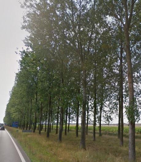 GroenLinks: kap bomen langs A15 pas als doortrekking zeker is
