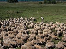 Natura 2000-status kan van Wierdense Veld gehaald worden, vindt ruime raadsmeerderheid