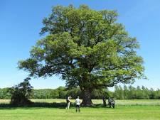 Gratis bomen in Bronckhorst