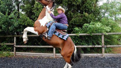 """De enige Belgische in Amerikaanse cowboywedstrijd: """"110 dagen om band met mijn mustang te vormen"""""""
