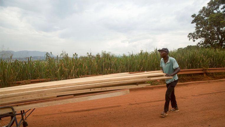Houthandel in de Centraal Afrikaanse Republiek. Beeld null