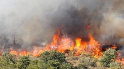 Struikgewas schiet in brand: meer dan 2.500 vakantiegangers geëvacueerd in Argelès-sur-Mer