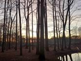 VVD krijgt zijn zin niet: bospad Breda blijft dicht vanwege zeldzame rapunzel