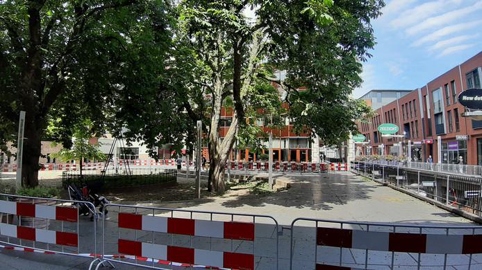De kastanjeboom aan de Marikenstraat is nog omgeven door dranghekken. In het midden is de kale plek goed te zien.