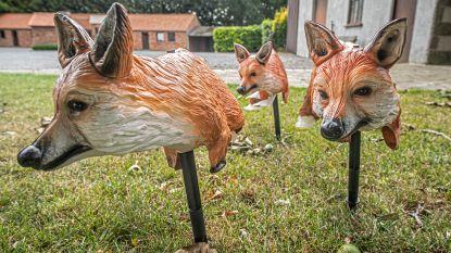 Gemeente pakt duivenplaag aan met nepvossen