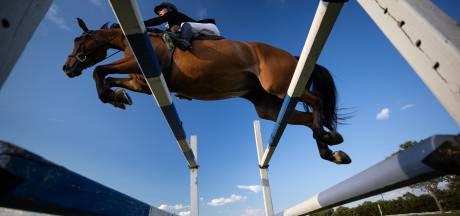 Un cheval perd la vie accidentellement lors d'une compétition de saut d'obstacles