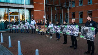 Animal Rights en Bite Back voeren stil protest tegen everzwijnenjacht