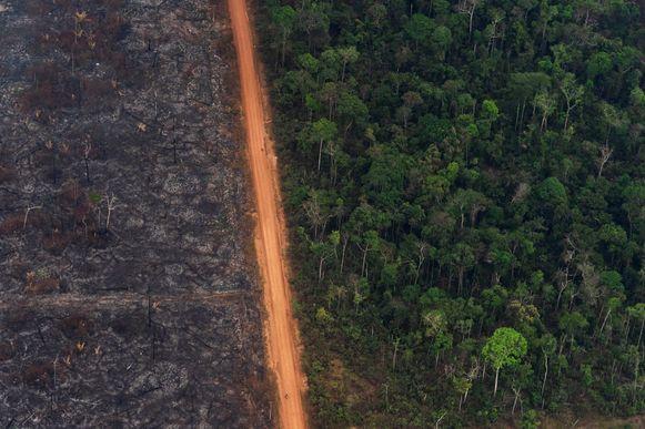 Grote bosbranden teisterden het Amazonewoud de afgelopen maanden.